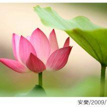 연꽃 사진전